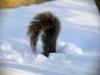 хвіст з снігом