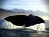хвіст кита