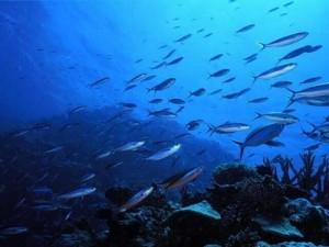 Кісткові риби