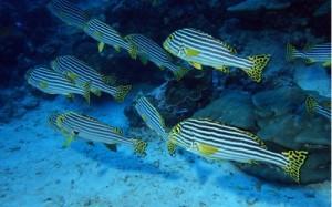 Плавальний міхур риб