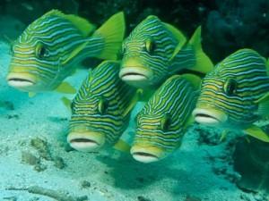 Визначення риб