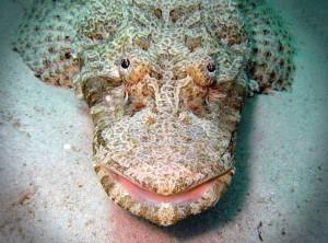 риба-крокодил-голова3