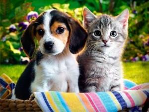 собаки і коти