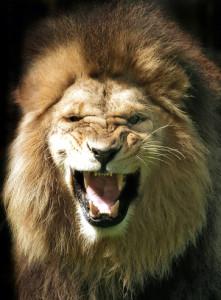 Зуби лева